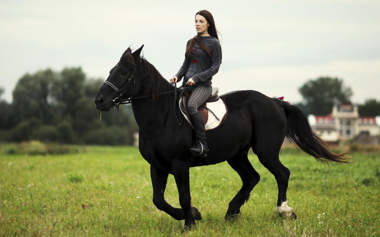 аренда лошадей