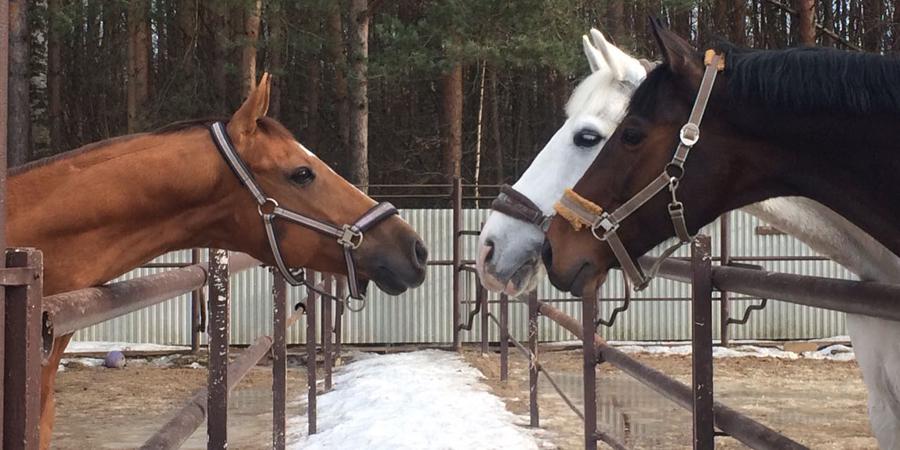 Конный клуб на юго западе москвы клуб ночные волки в долгопрудном